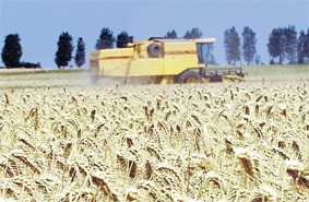 agriculture_010.jpg