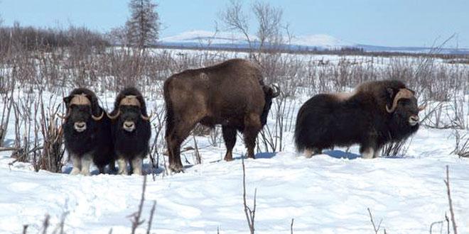 bizons-003.jpg