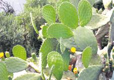 cactus_a1_086.jpg