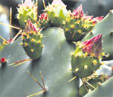 cactus_a2_086.jpg
