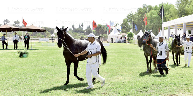 cheval-barbe-097.jpg
