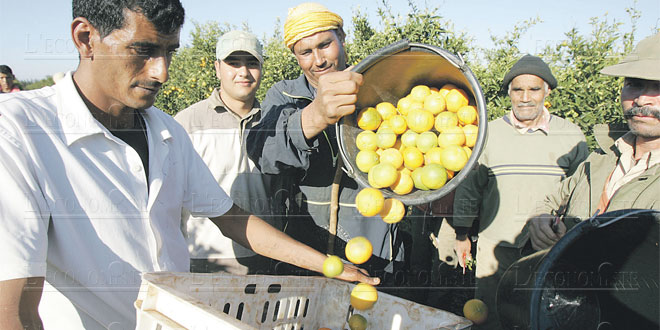 citron-038.jpg