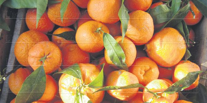 clementine-093.jpg