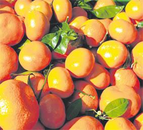 clementine_berkane_038.jpg