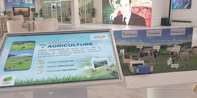 iam-agriculture-059.jpg