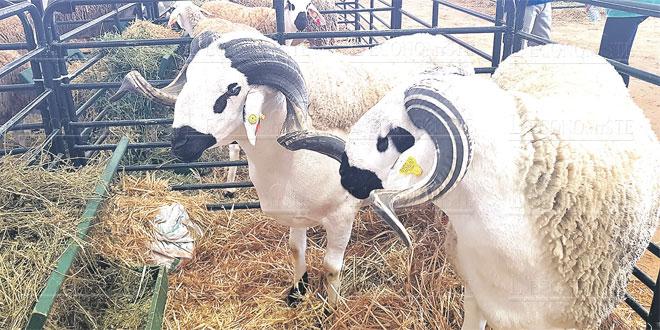moutons-059.jpg