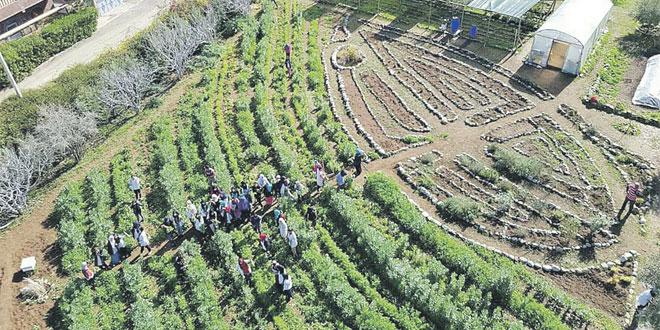 permaculture-00.jpg