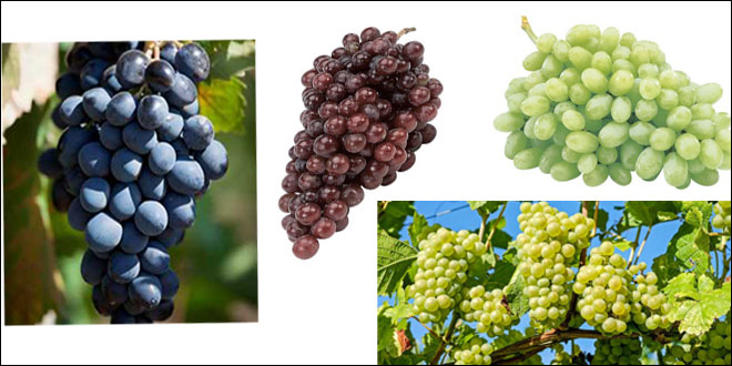 raisins-084.jpg