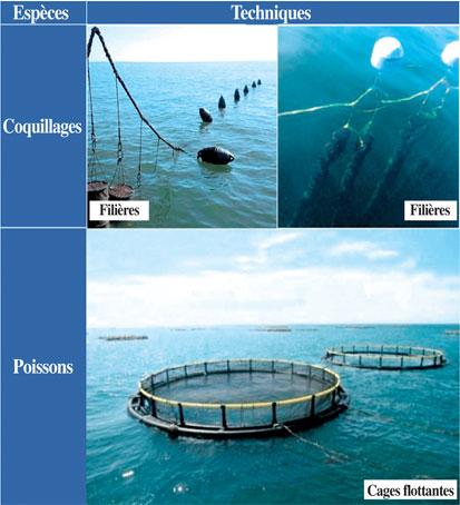technique-aquaculture-083.jpg