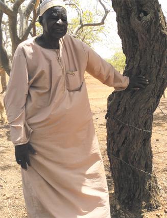 termites_vii_052.jpg