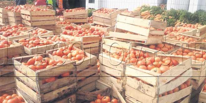 tomates-tut-absoluta-045.jpg