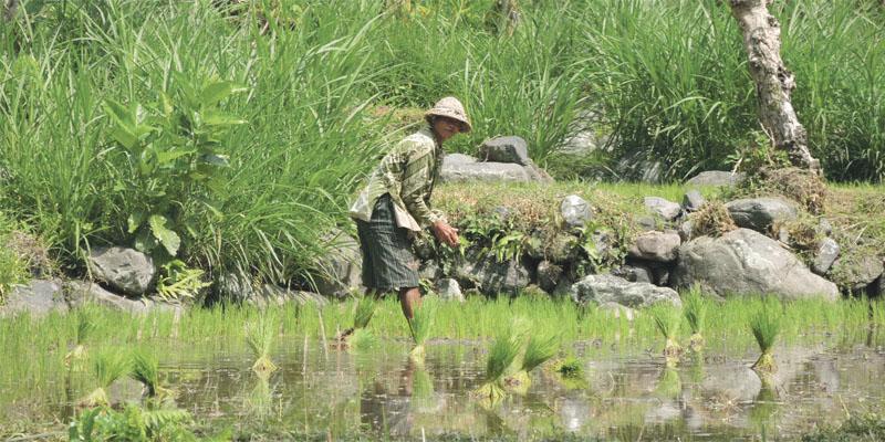 vietnam_ris_040.jpg