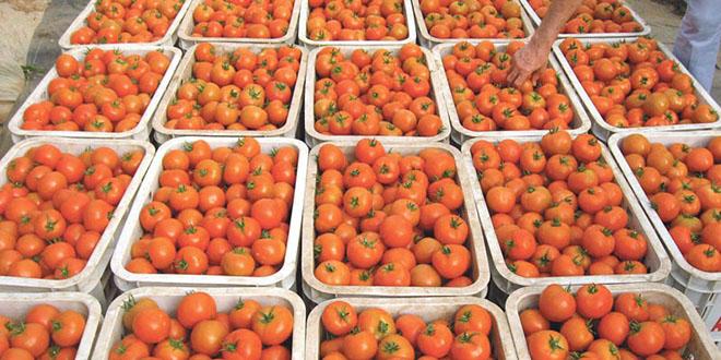 Fruits/Légumes: Les exportations marocaines vers l'UE poursuivent leur hausse