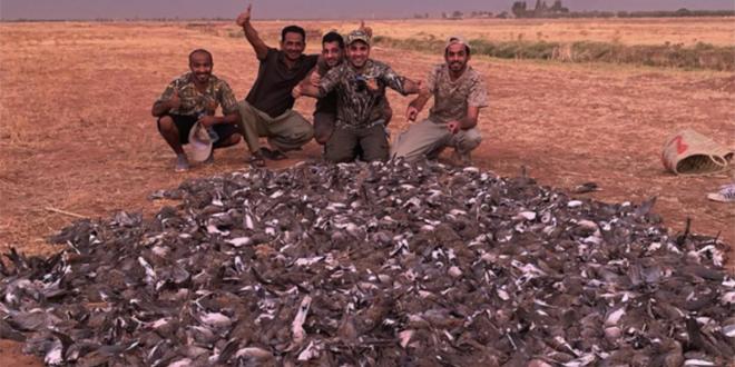 Tourterelles massacrées à Marrakech: Les sanctions tombent